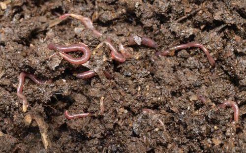 C mo mejorar el suelo con humus de lombriz miriego for Como abrillantar el suelo