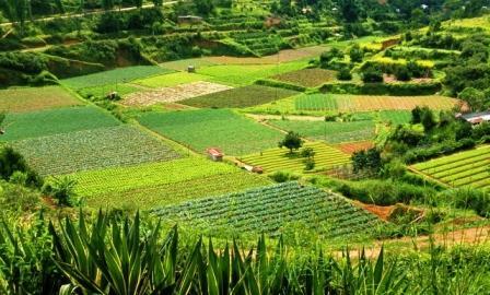 diversificaci n de cultivos miriego