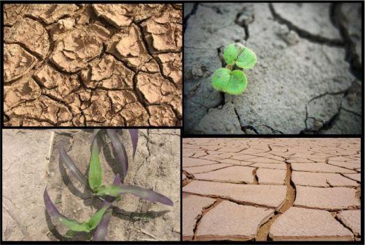 AAS_ErosionSuelosAgricolas
