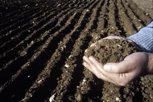 La agricultura como fuente y sumidero
