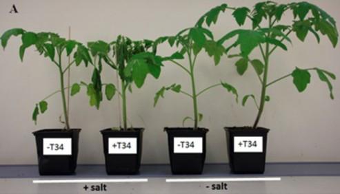 Combinar-fertilizantes-quimicos-y-biologicos-dana-la-respuesta-de-las-plantas-al-estres_image_380